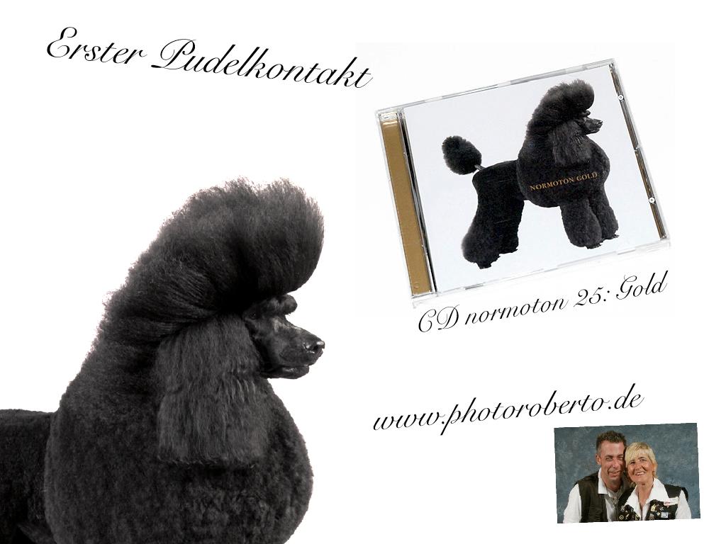 Bernhard Moosbauer / Pudel Portraits