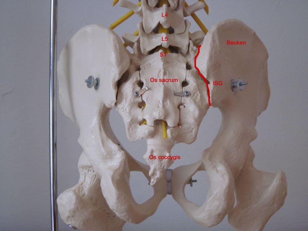 Petra Butschko / Ursachen von Rückenschmerzen und ihre Folgen
